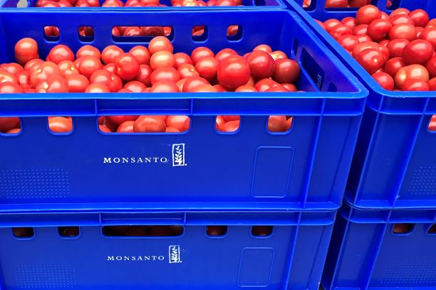 Efficient and ergonomic tomato seed extraction is possible!